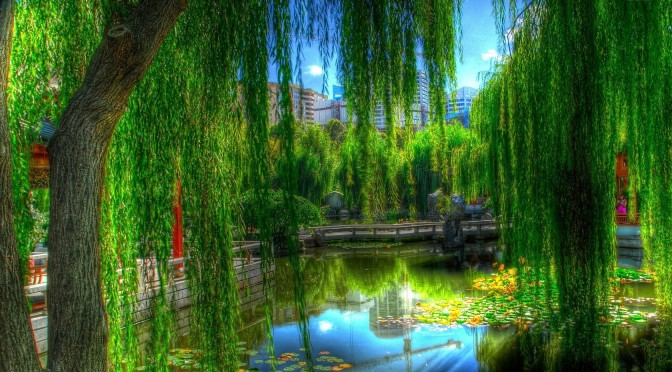 The Willow Speaks